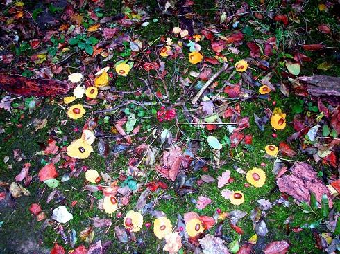 Samhain Leaf Mandala