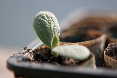 seedling germinating